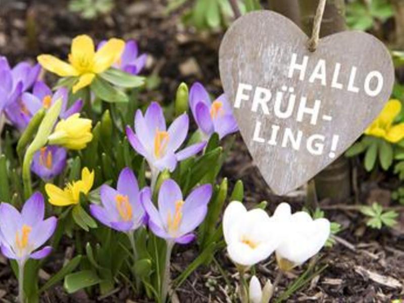 Frühling Frühlingsblumen Hallo